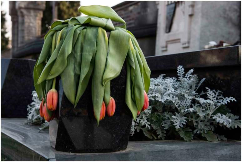 Tulpen -1