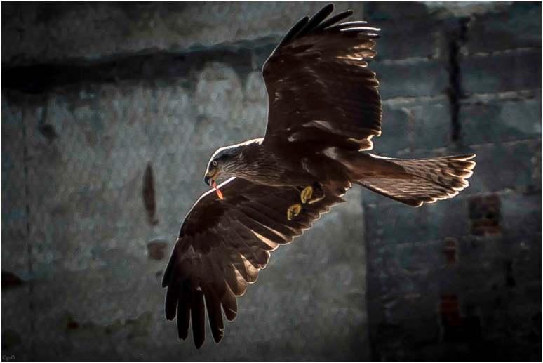 Eagle-1-2
