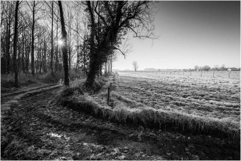 Winterbeelden-3
