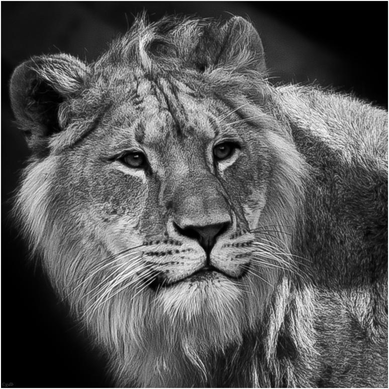 Leeuw-1