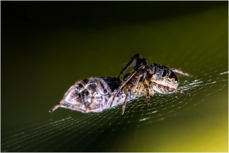 Etende spin