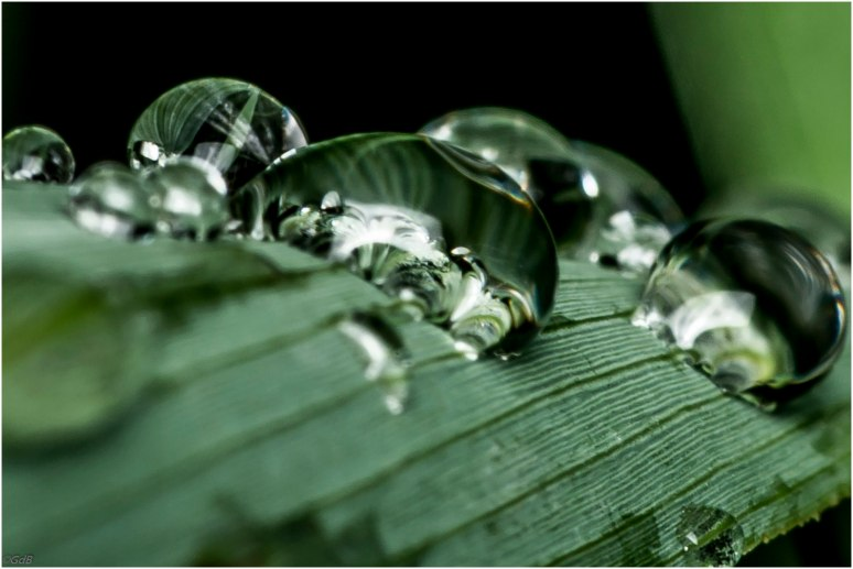 Bubbels-1