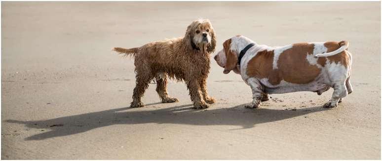 Doggies (2)