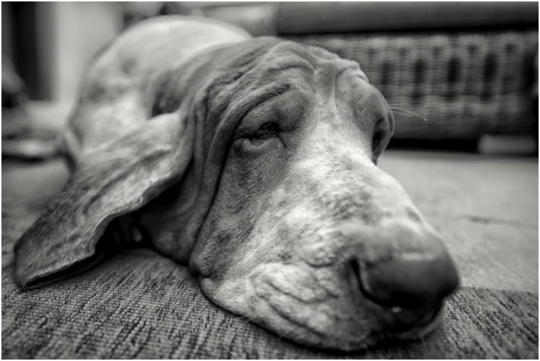 Doghead1