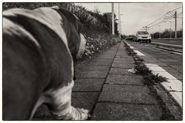 dog's point of view