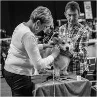 Honden en baasjes-14