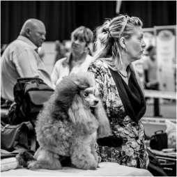 Honden en baasjes-5