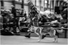 Honden en baasjes-7