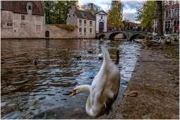 Brugge-3
