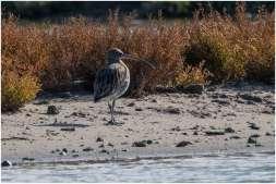 Vogelspotten zeeland-13