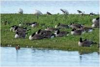 Vogelspotten zeeland-19