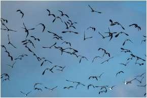 Vogelspotten zeeland-2