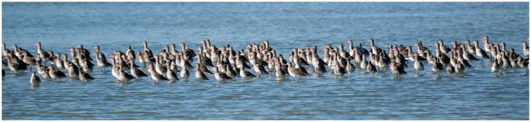 Vogelspotten zeeland-3
