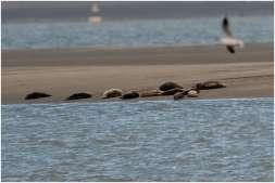 Vogelspotten zeeland-6
