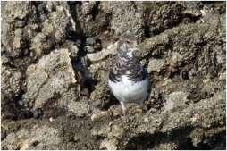 Vogelspotten zeeland-9