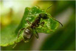 Mieren-3