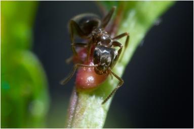 Mieren-5